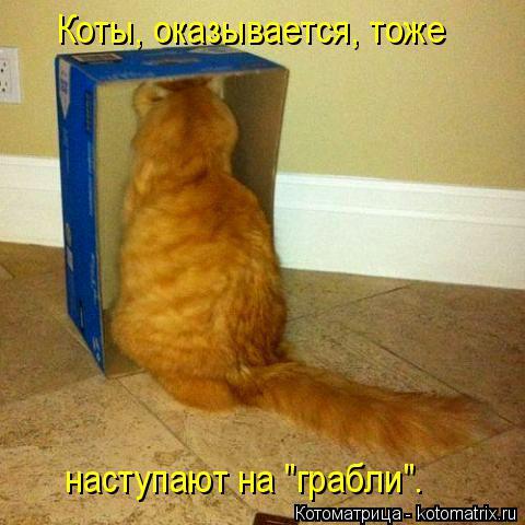 """Котоматрица: Коты, оказывается, тоже  наступают на """"грабли""""."""