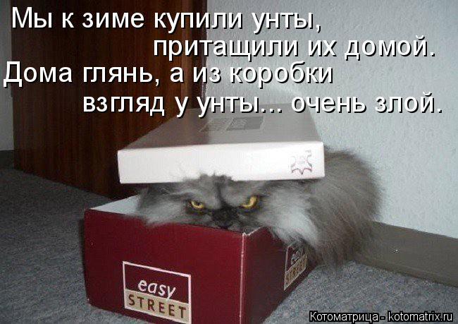 Котоматрица: Мы к зиме купили унты, притащили их домой. Дома глянь, а из коробки взгляд у унты... очень злой.