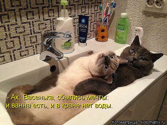 Котоматрица: - Ах, Васенька, сбылись мечты: и ванна есть, и в кране нет воды.