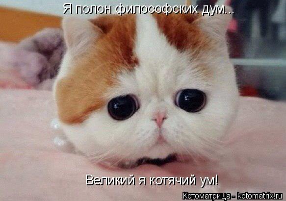 Котоматрица: Я полон философских дум... Великий я котячий ум!