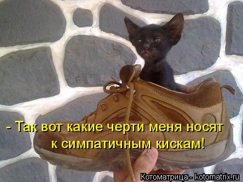 Котоматрица: - Так вот какие черти меня носят  к симпатичным кискам!