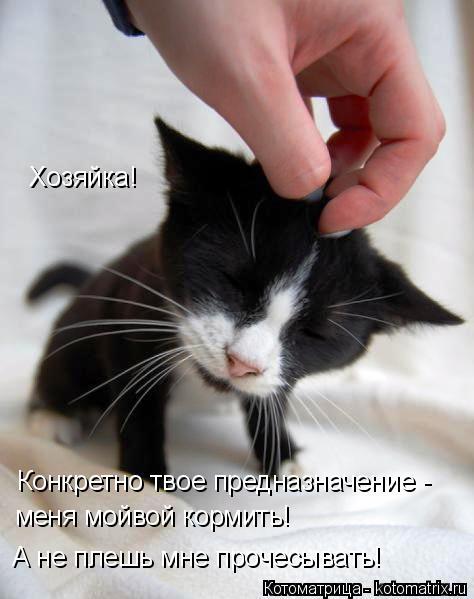Котоматрица: Хозяйка!  Конкретно твое предназначение -  меня мойвой кормить!  А не плешь мне прочесывать!