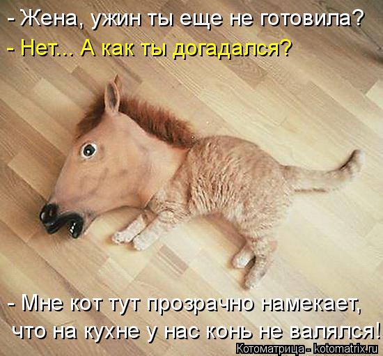 Котоматрица: - Жена, ужин ты еще не готовила? - Нет... А как ты догадался? - Мне кот тут прозрачно намекает,  что на кухне у нас конь не валялся!
