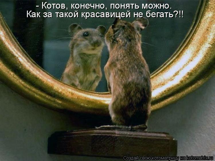 Котоматрица: - Котов, конечно, понять можно. Как за такой красавицей не бегать?!!