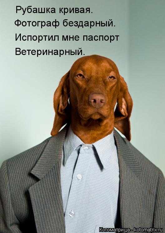 Котоматрица: Рубашка кривая.  Фотограф бездарный. Испортил мне паспорт Ветеринарный.