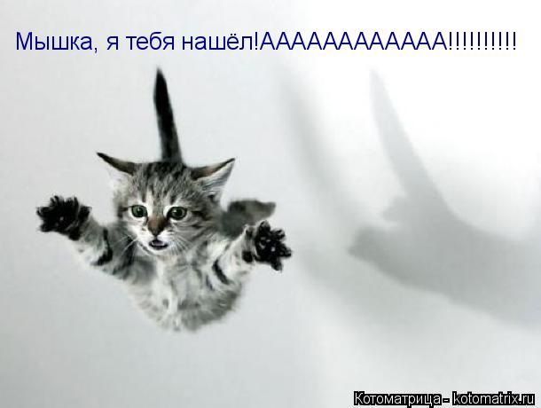 Котоматрица: Мышка, я тебя нашёл!АААААААААААА!!!!!!!!!!