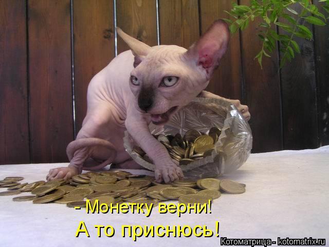 http://kotomatrix.ru/images/lolz/2014/12/03/kotomatritsa_Lo.jpg