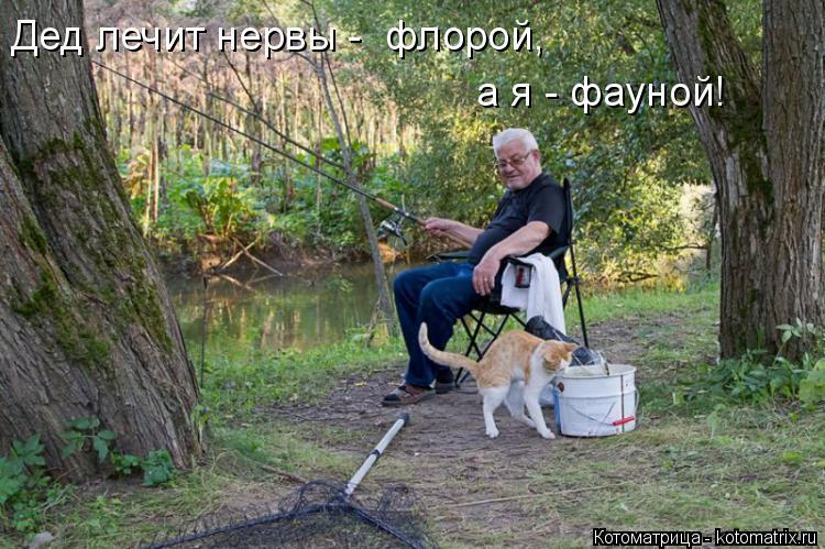 Котоматрица: Дед лечит нервы -  флорой, а я - фауной!