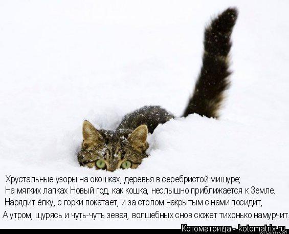 Котоматрица: На мягких лапках Новый год, как кошка, неслышно приближается к Земле. Хрустальные узоры на окошках, деревья в серебристой мишуре; Нарядит ёл