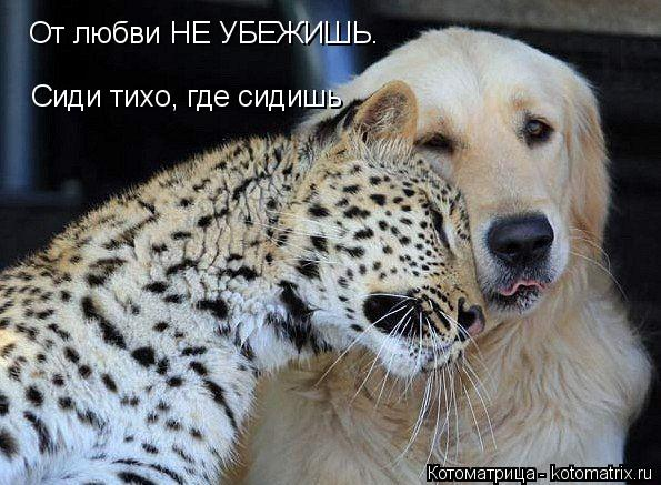 Котоматрица: От любви НЕ УБЕЖИШЬ. Сиди тихо, где сидишь