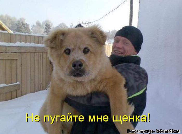 Котоматрица: Не пугайте мне щенка!