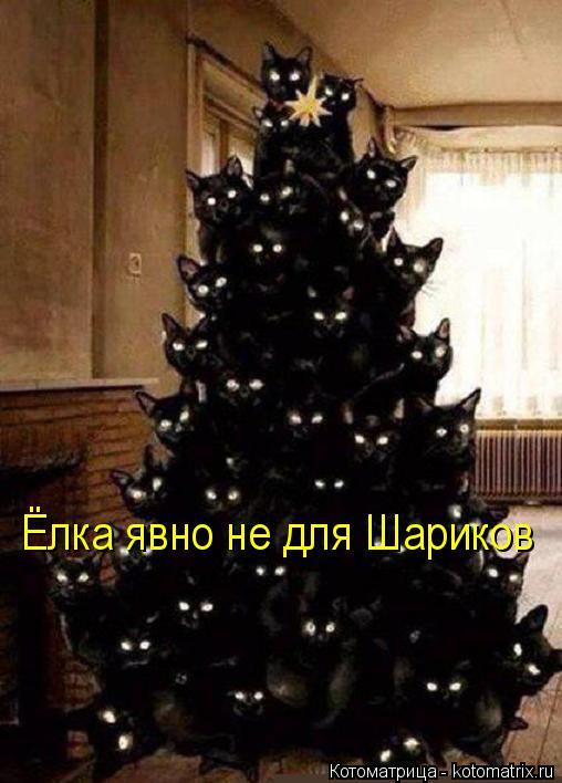 Котоматрица: Ёлка явно не для Шариков
