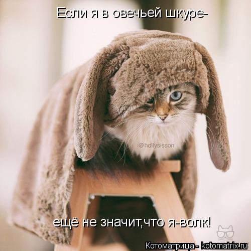 Котоматрица: Если я в овечьей шкуре-  ещё не значит,что я-волк!