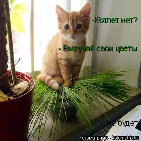 Котоматрица: -Котлет нет? - И не будет. - Выручай свои цветы