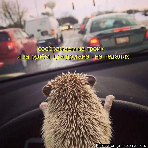 Котоматрица: соображаем на троих: я за рулём, два другана - на педалях!