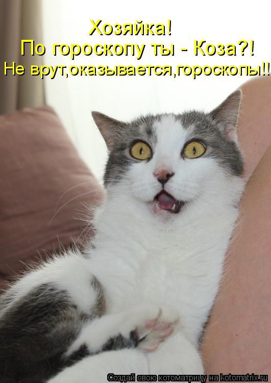 Котоматрица: По гороскопу ты - Коза?! Хозяйка! Не врут,оказывается,гороскопы!!!
