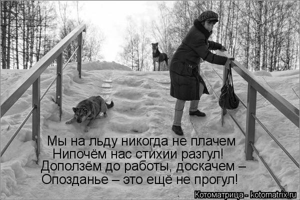 Котоматрица: Мы на льду никогда не плачем Нипочём нас стихии разгул! Доползём до работы, доскачем –  Опозданье – это ещё не прогул!