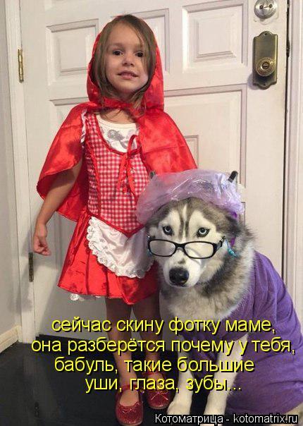 Котоматрица: сейчас скину фотку маме, она разберётся почему у тебя, бабуль, такие большие уши, глаза, зубы...
