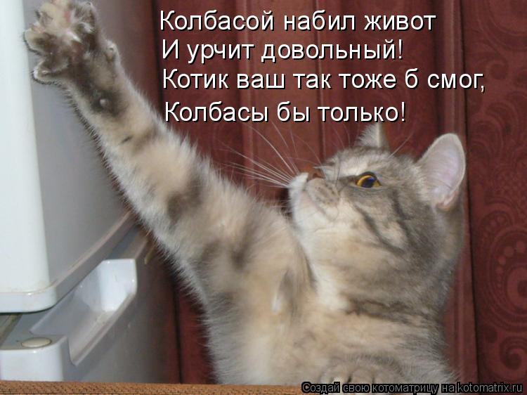 Котоматрица: Колбасой набил живот И урчит довольный! Котик ваш так тоже б смог, Колбасы бы только!