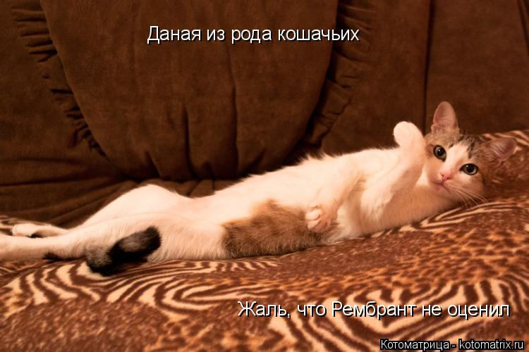Котоматрица: Даная из рода кошачьих Жаль, что Рембрант не оценил
