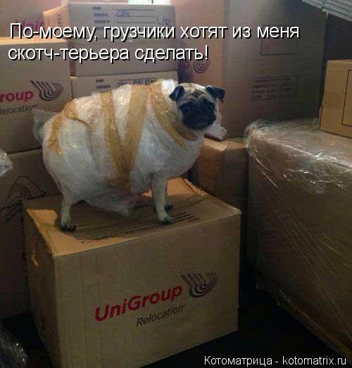 Котоматрица: По-моему, грузчики хотят из меня скотч-терьера сделать!