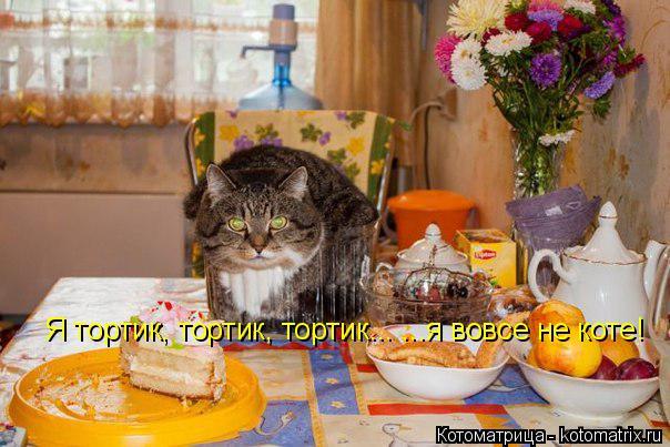 Котоматрица: Я тортик, тортик, тортик... ...я вовсе не коте!