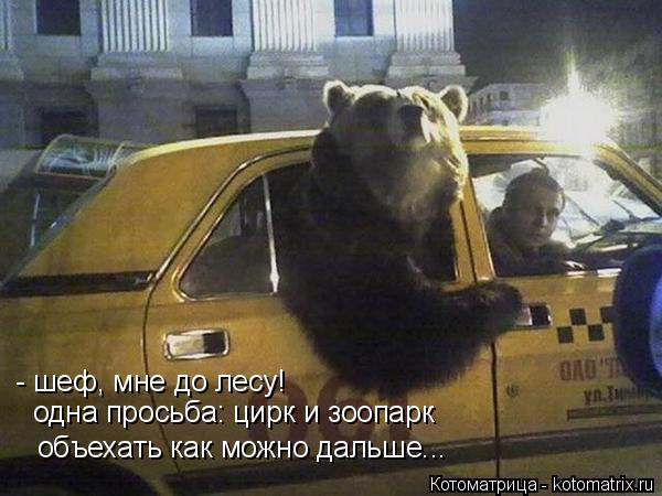 Котоматрица: - шеф, мне до лесу! одна просьба: цирк и зоопарк объехать как можно дальше...