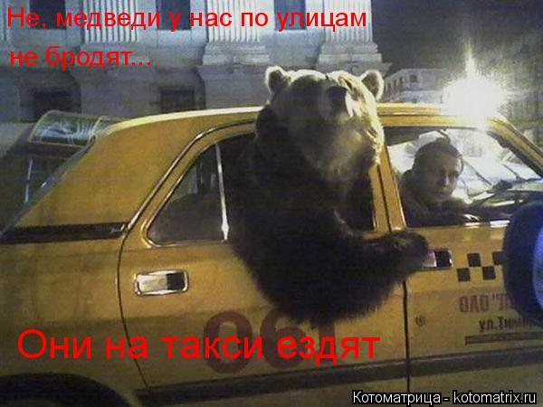 Котоматрица: Они на такси ездят Не, медведи у нас по улицам не бродят...