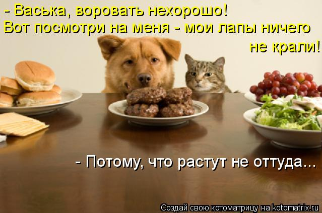 http://kotomatrix.ru/images/lolz/2014/12/09/kotomatritsa_U.jpg