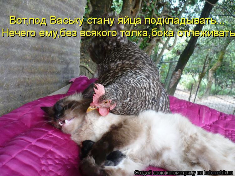 Котоматрица: Нечего ему,без всякого толка,бока отлеживать... Вот,под Ваську стану яйца подкладывать...