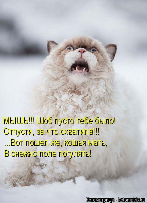 Котоматрица: МЫШЬ!!! Шоб пусто тебе было! Отпусти, за что схватила!!! ...Вот пошел же, кошья мать, В снежно поле погулять!