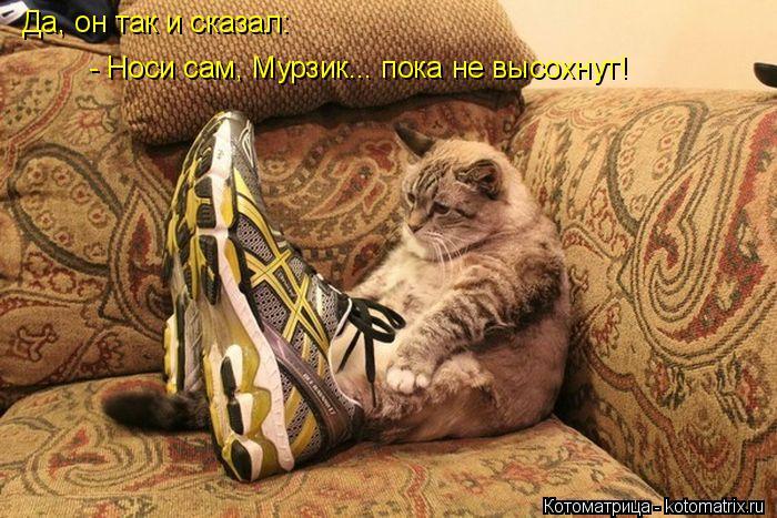Котоматрица: Да, он так и сказал:  - Носи сам, Мурзик... пока не высохнут!