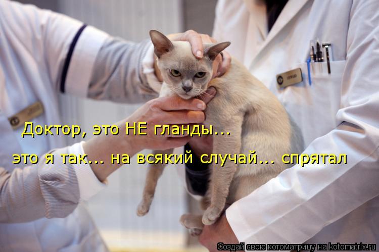 Котоматрица: Доктор, это НЕ гланды... это я так... на всякий случай... спрятал