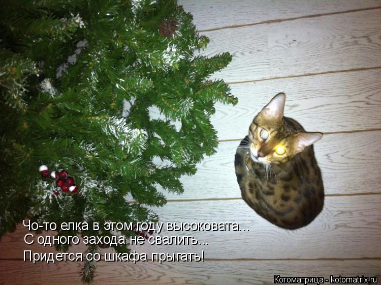 Котоматрица: Чо-то елка в этом году высоковата... С одного захода не свалить... Придется со шкафа прыгать!