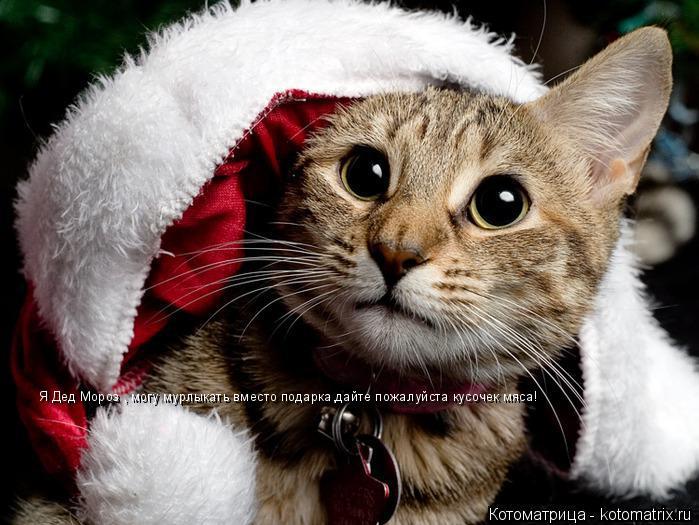Котоматрица: Я Дед Мороз , могу мурлыкать вместо подарка,дайте пожалуйста кусочек мяса!