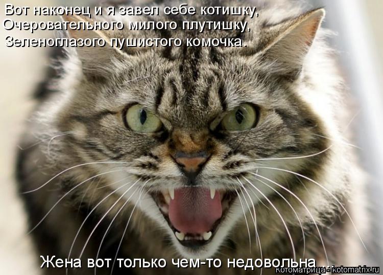 Котоматрица: Вот наконец и я завел себе котишку, Очеровательного милого плутишку, Зеленоглазого пушистого комочка. Жена вот только чем-то недовольна ...