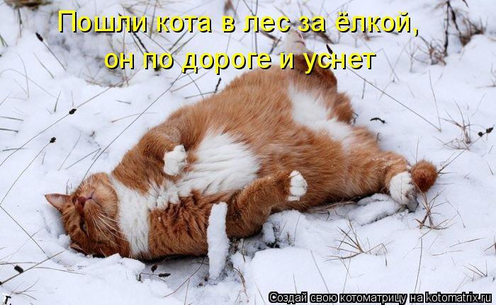 Котоматрица: Пошли кота в лес за ёлкой, он по дороге и уснет