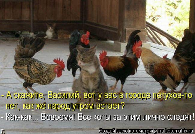 Котоматрица: - А скажите, Василий, вот у вас в городе петухов-то нет, как же народ утром встает? - Как-как... Вовремя! Все коты за этим лично следят!
