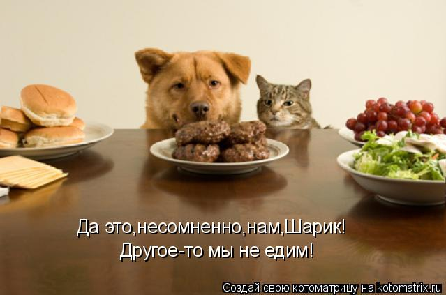 Котоматрица: Да это,несомненно,нам,Шарик! Другое-то мы не едим!