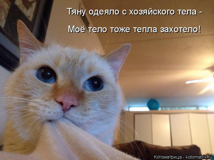 Котоматрица: Тяну одеяло с хозяйского тела - Моё тело тоже тепла захотело!