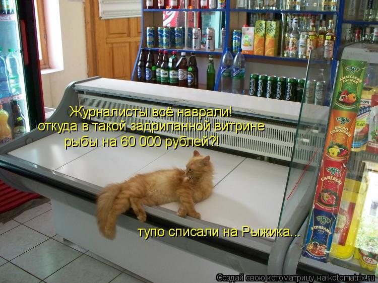 Котоматрица: Журналисты всё наврали! откуда в такой задрипанной витрине рыбы на 60 000 рублей?! тупо списали на Рыжика...