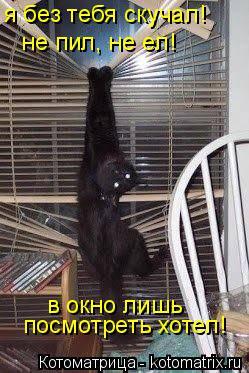 Котоматрица: не пил, не ел! в окно лишь посмотреть хотел! я без тебя скучал!
