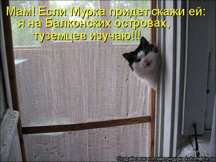 Котоматрица: Мам! Если Мурка придет,скажи ей: я на Балконских островах, туземцев изучаю!!!