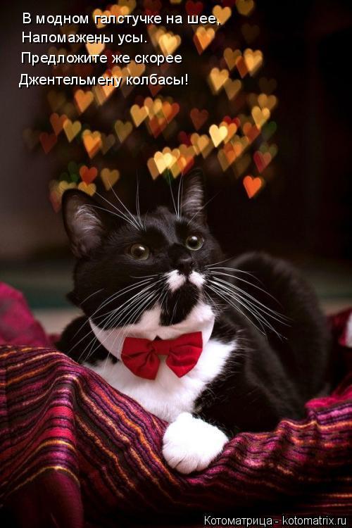 Котоматрица: В модном галстучке на шее, Напомажены усы. Предложите же скорее Джентельмену колбасы!