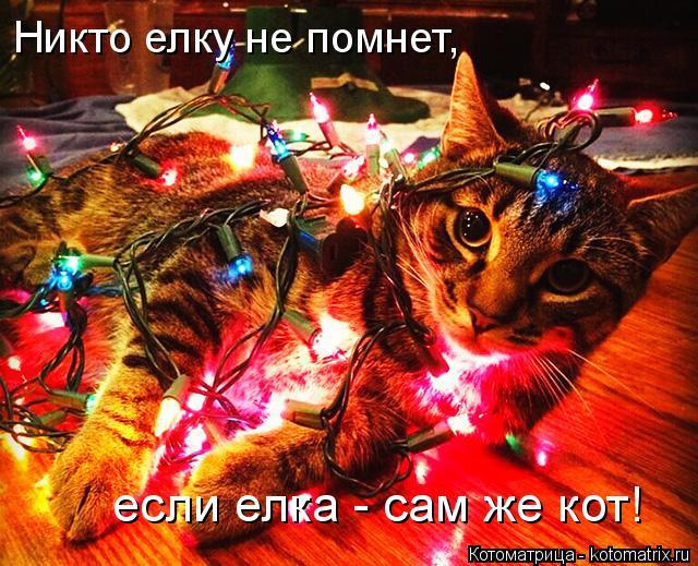 Котоматрица: Никто елку не помнет, если елка - сам же кот!