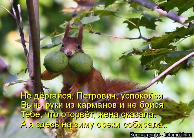Котоматрица: Не дёргайся, Петрович, успокойся. Вынь руки из карманов и не бойся. Тебе, что оторвёт, жена сказала. А я здесь на зиму орехи собирала..