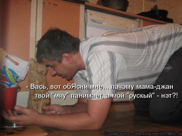 http://kotomatrix.ru/images/lolz/2014/12/15/kotomatritsa_qa.jpg