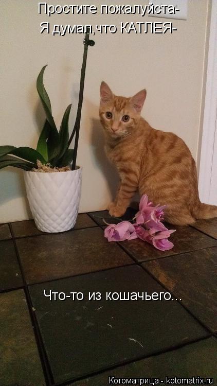 Котоматрица: Простите пожалуйста- Я думал,что КАТЛЕЯ- Что-то из кошачьего...