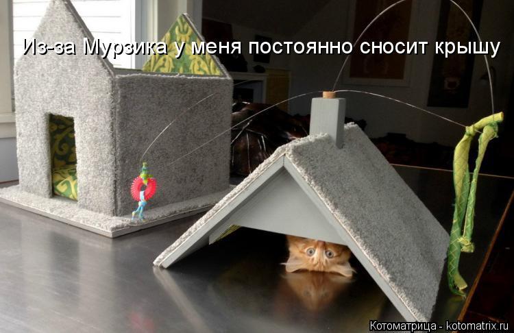 Котоматрица: Из-за Мурзика у меня постоянно сносит крышу