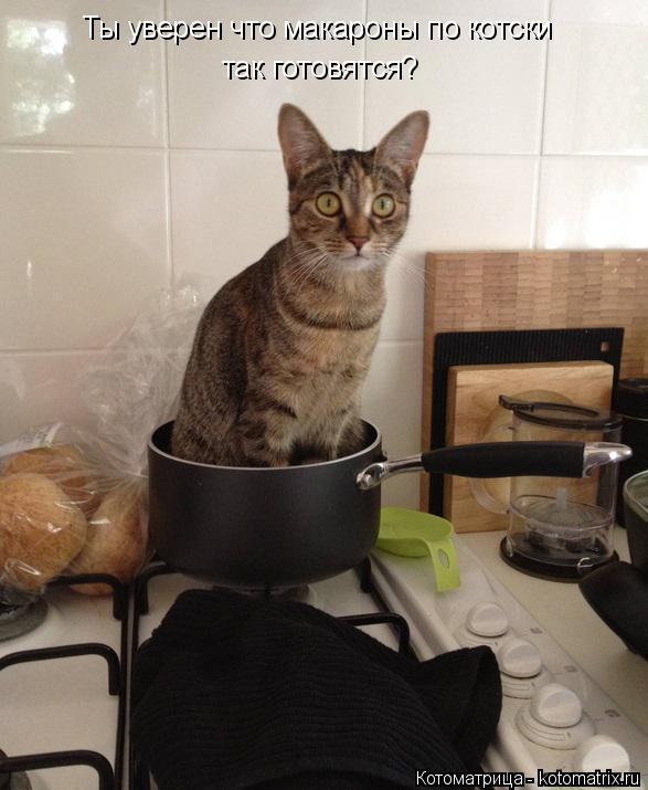 Котоматрица: Ты уверен что макароны по котски так готовятся?